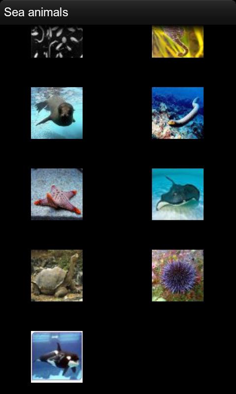 海洋动物名片(sea animals names & images)